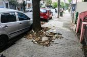 Root of tree damaging sidewalk
