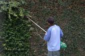Gardener cutting plant