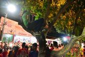 54 Festival de Parintins