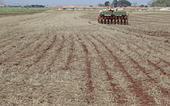 Após perdas produtores replantam soja