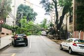 Queda de árvore no bairro de Perdizes