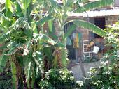 Covid 19 Pernambuco